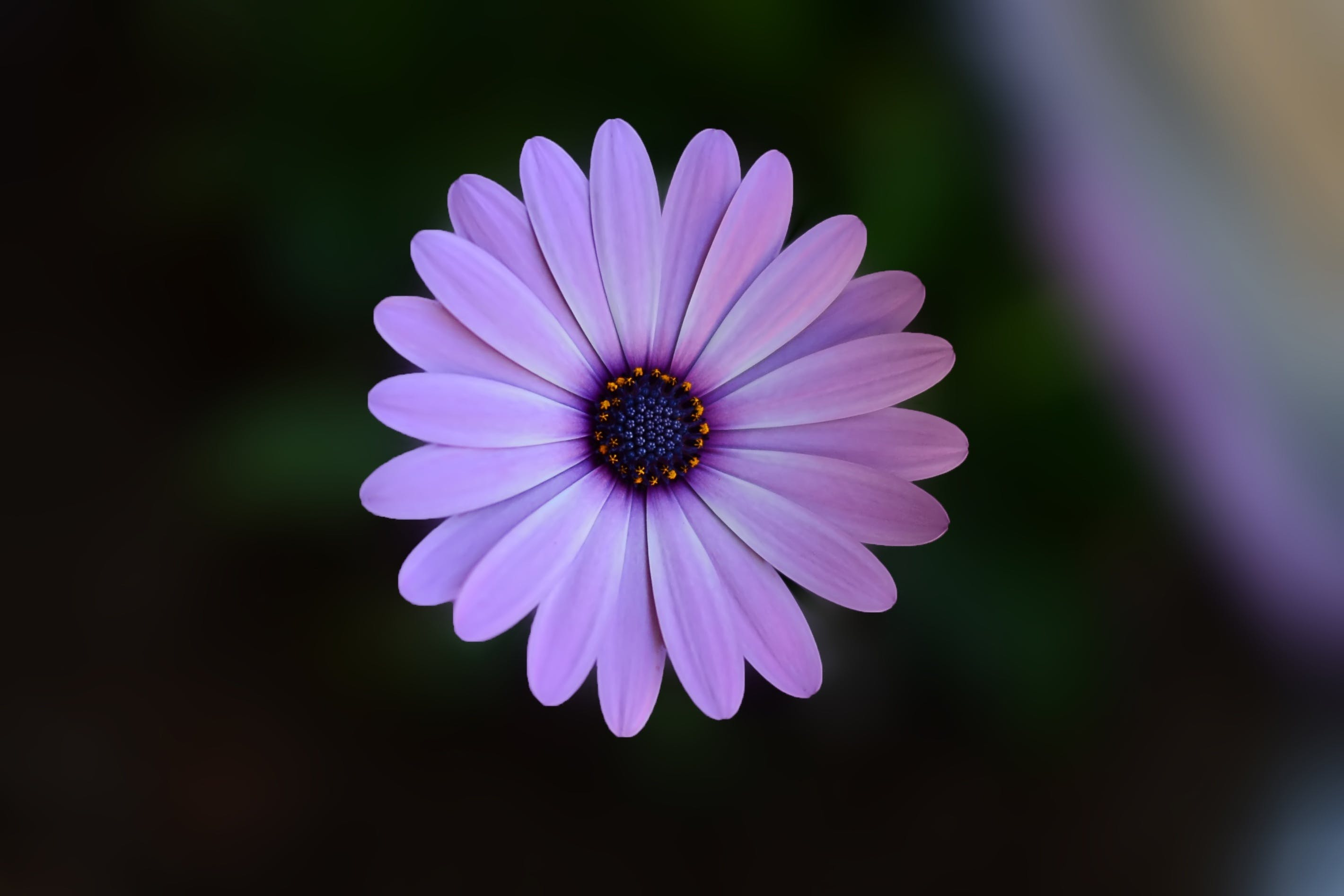 Shallow Focus Photography of Purple Flower