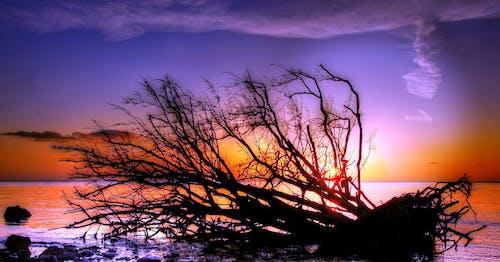 Základová fotografie zdarma na téma kmen stromu, moře, mraky, obloha
