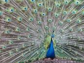 nature, bird, animal