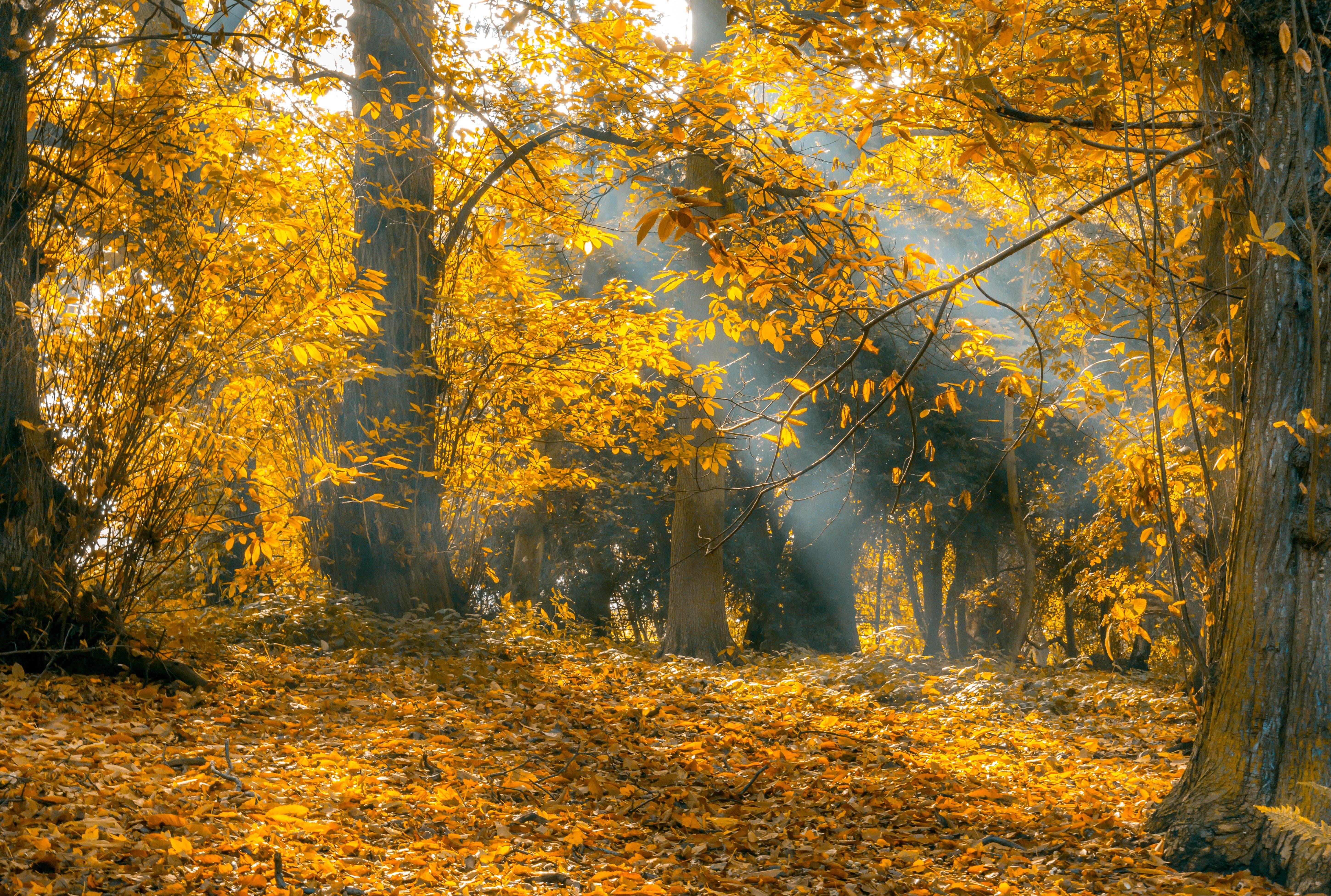 autumn, autumn leaves, branch