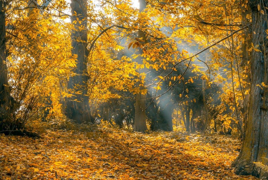amarelo, árvores, aumento