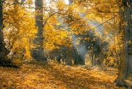 landscape, nature, forest