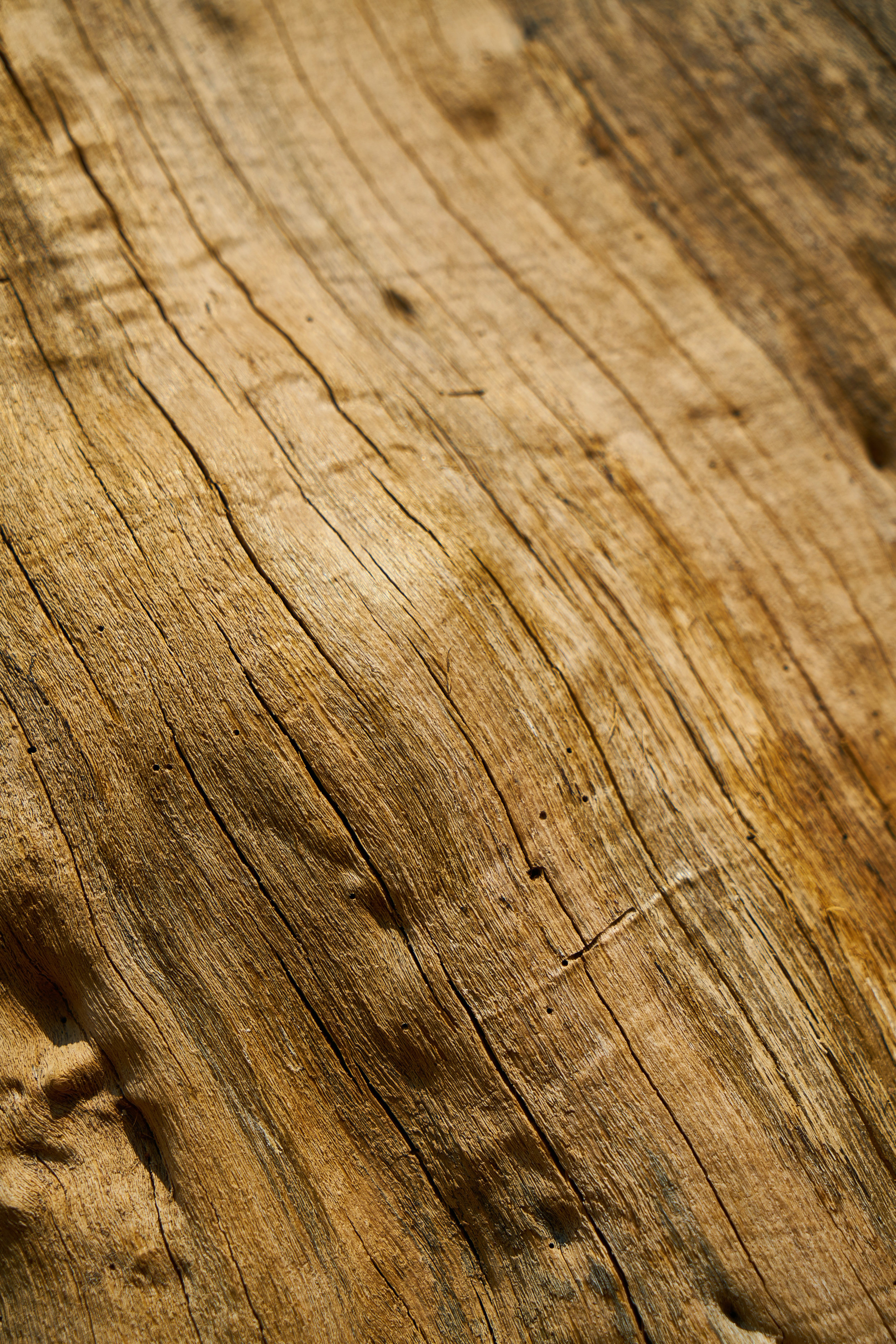 Free stock photo of wood, nature, pattern, texture