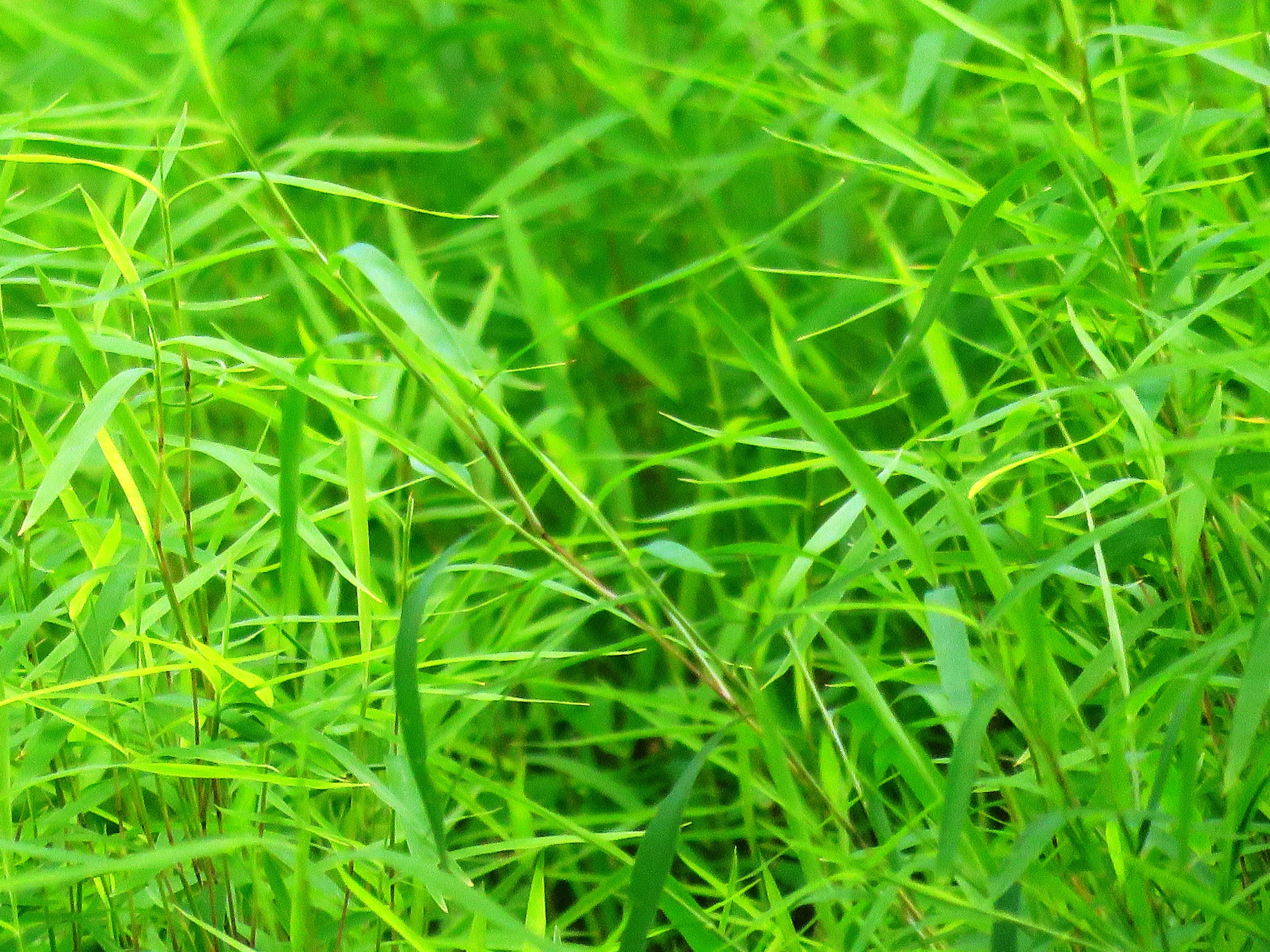 Kostenloses Stock Foto zu gras, grün, rasen, umwelt