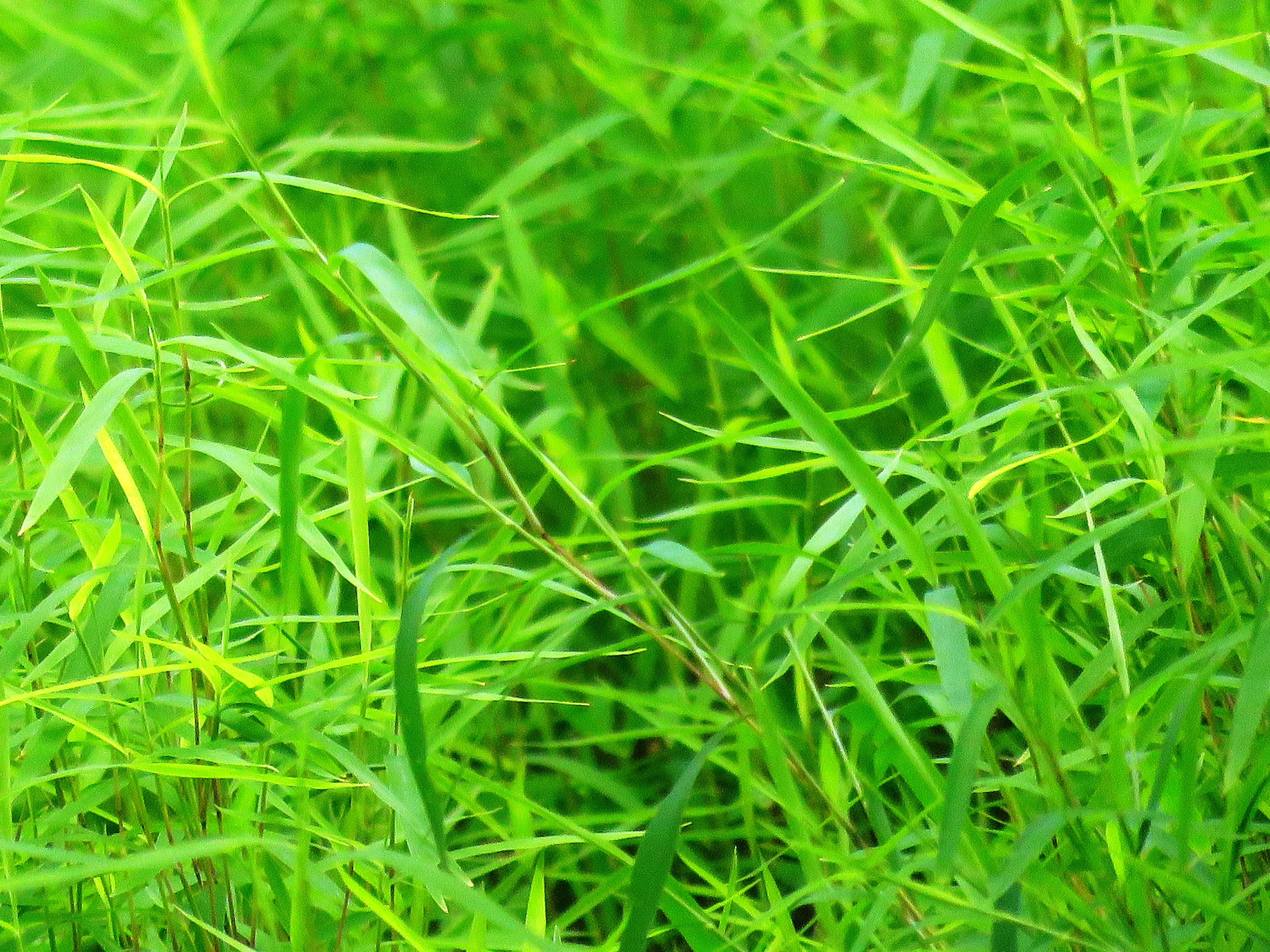 Free stock photo of grass, lawn, green, environment