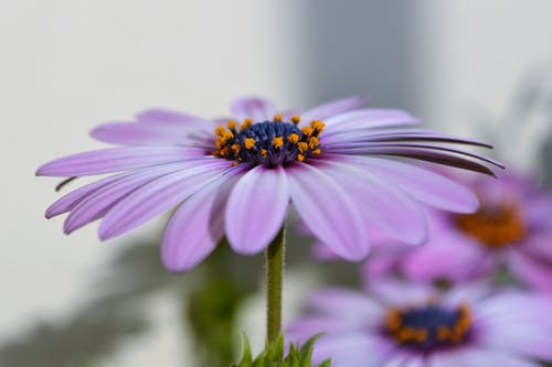 Purple Petaled Floewr