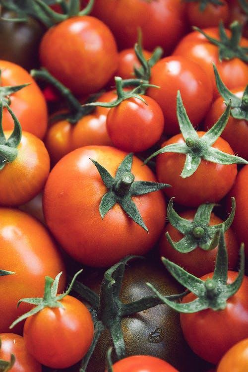 Tomate Naranja Sobre Hojas Verdes