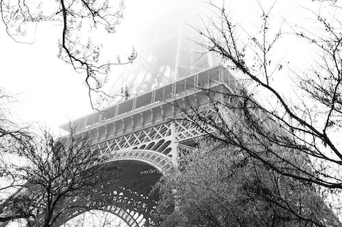 Grayscale Photo of Trees and Bridge