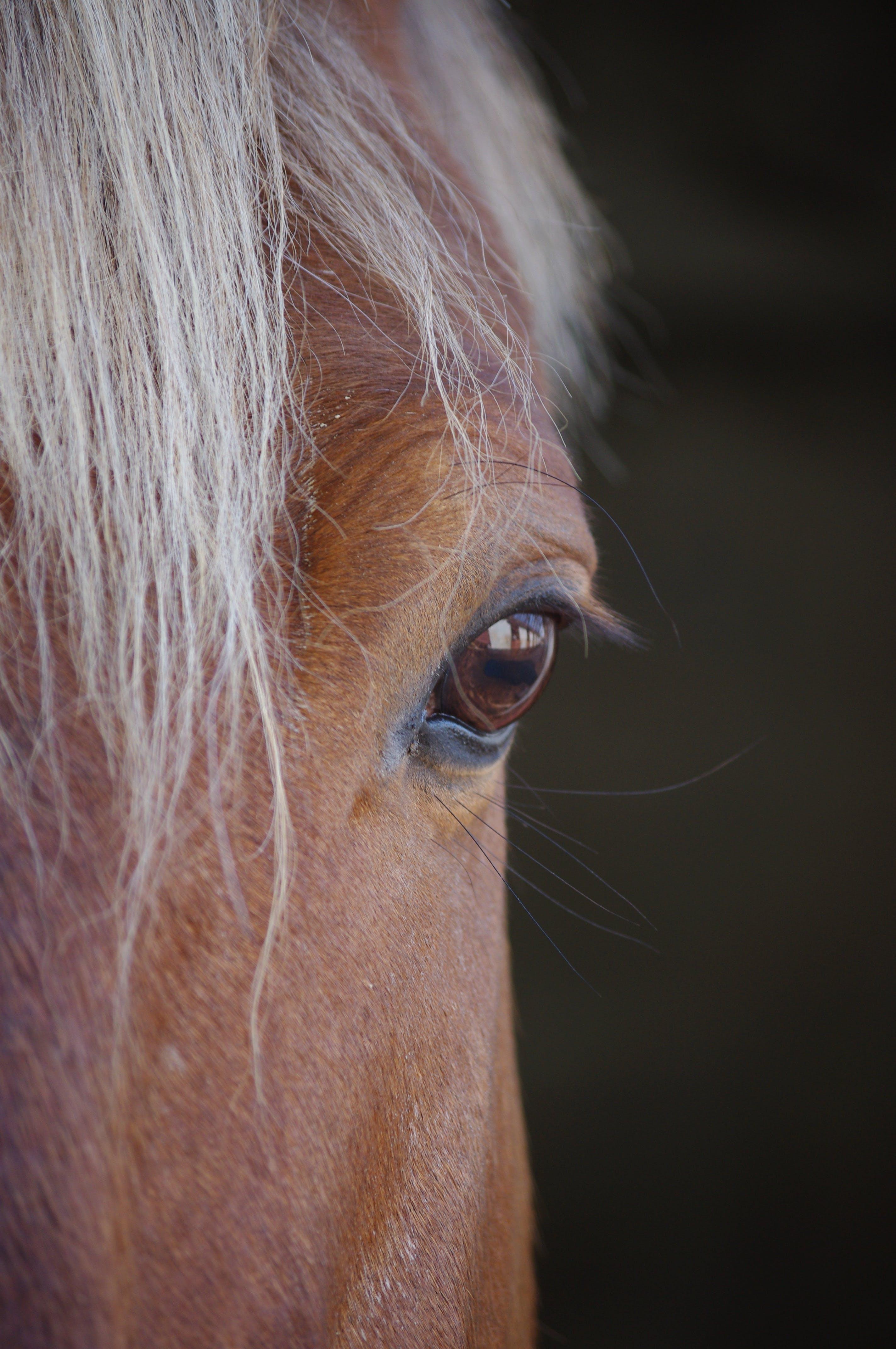 Foto stok gratis berbayang, berfokus, fotografi binatang, kepala kuda
