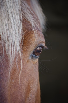 Free stock photo of blur, portrait, eye, horse