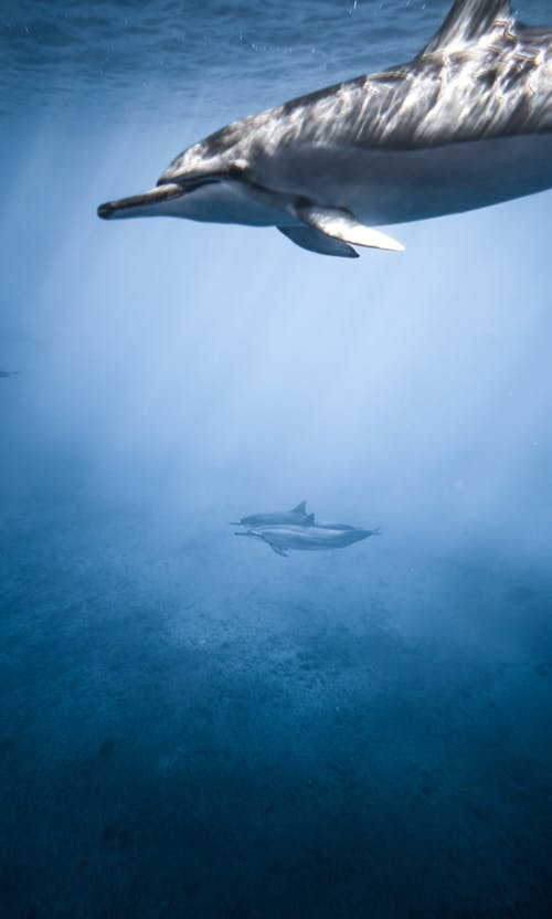 Group of adorable dolphins floating in depth of blue ocean on sunny day