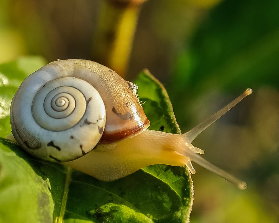 White and Brown Shell Snail on Green Leaf