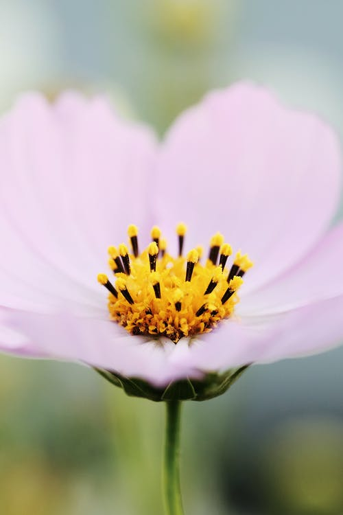 Free stock photo of beautiful flower, beauty of nature, close up