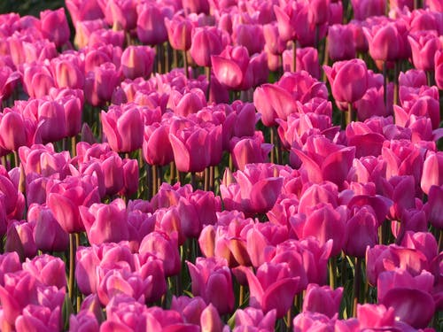 Fotos de stock gratuitas de delicado, floración, floreciente, flores