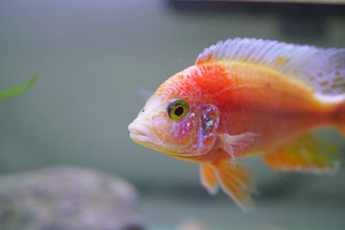 Kostnadsfri bild av akvarium, biologi, djup