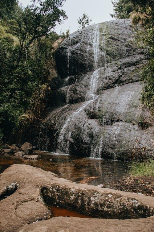 Fotos de stock gratuitas de agua, al aire libre, arboles