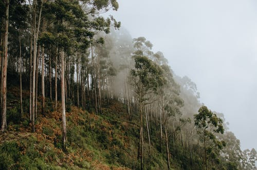 Kostenloses Stock Foto zu bäume, draußen, grün