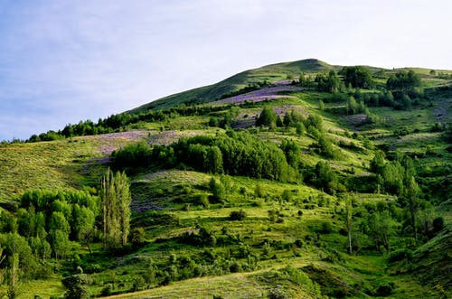 Kostenloses Stock Foto zu außerorts, bäume, berg, blühen