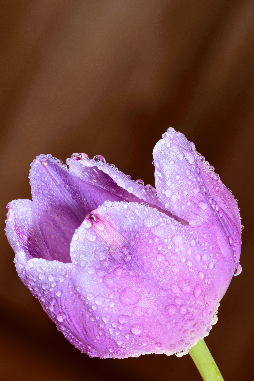 Shallow Focus Photo of Wet Purple Flower