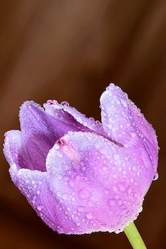 Free stock photo of petals, blur, dew, flower