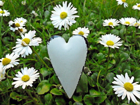 Free stock photo of nature, heart, flowers, yellow