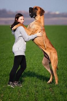 Free stock photo of woman, girl, animal, dog