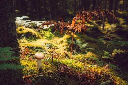 From above of mushroom growing among moss fern and trees in dense woodland