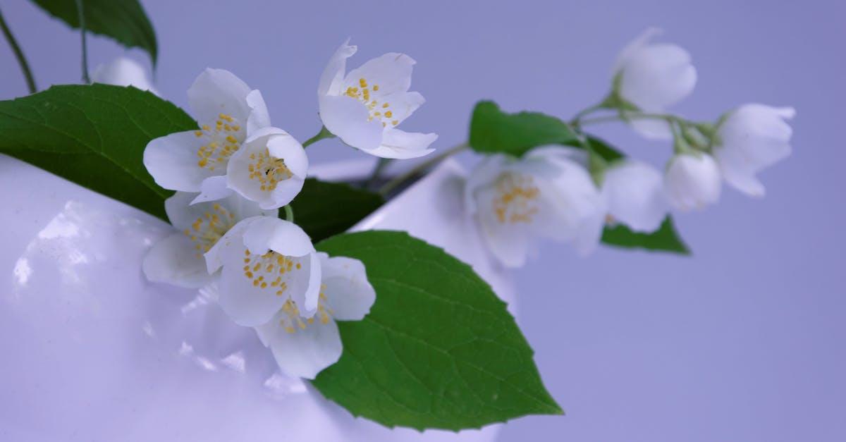 Загадочные картинки, цветок жасмина открытки