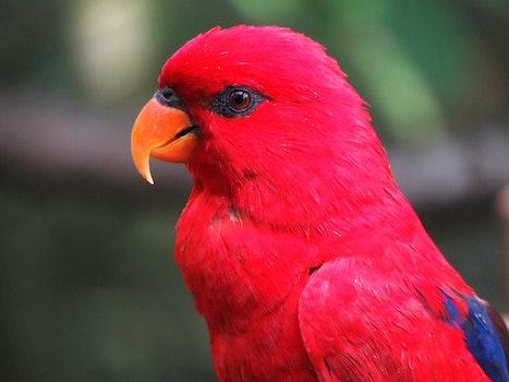 Kostenloses Stock Foto zu vogel, rot, tier, sitzen