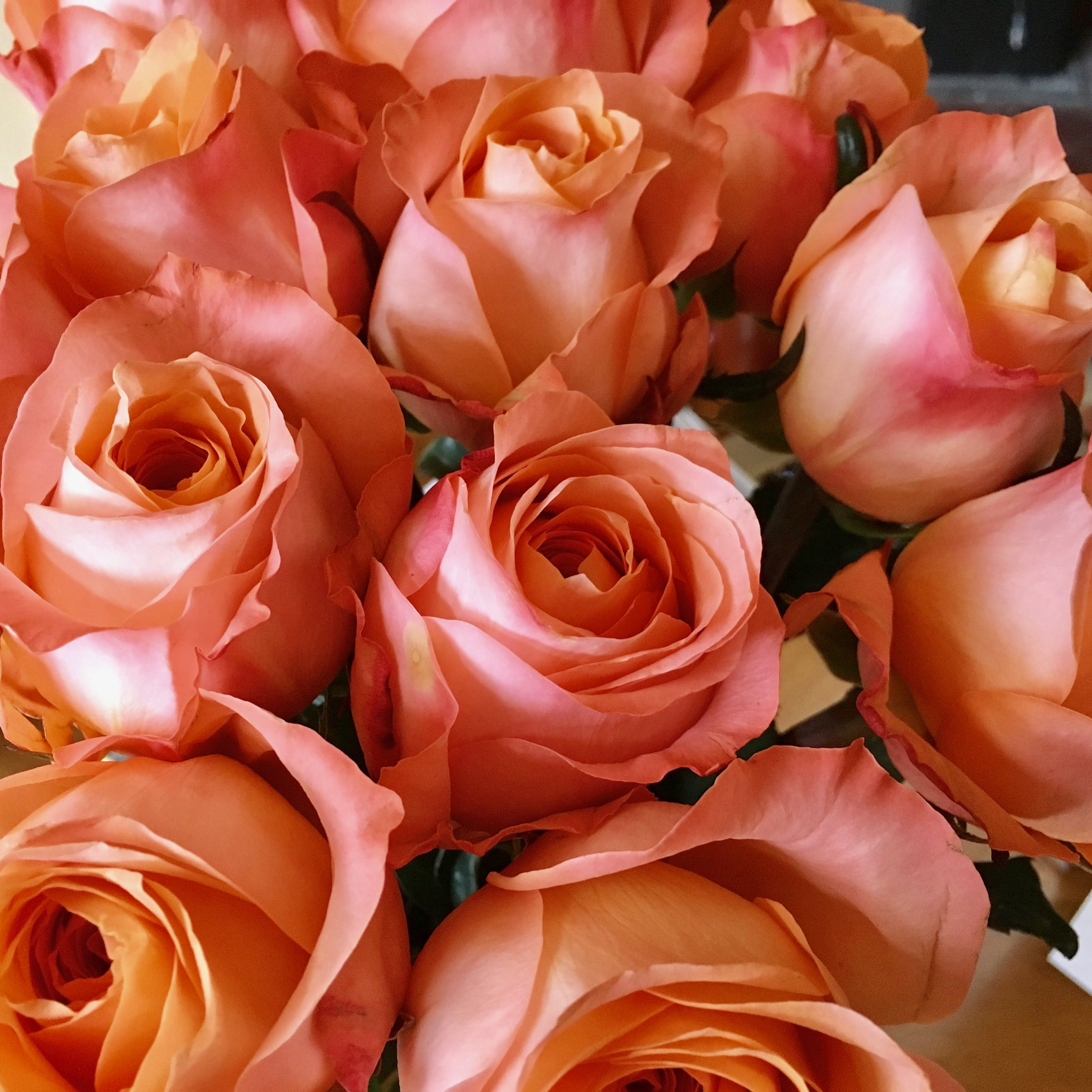 Pile of Pink Rose Flowers