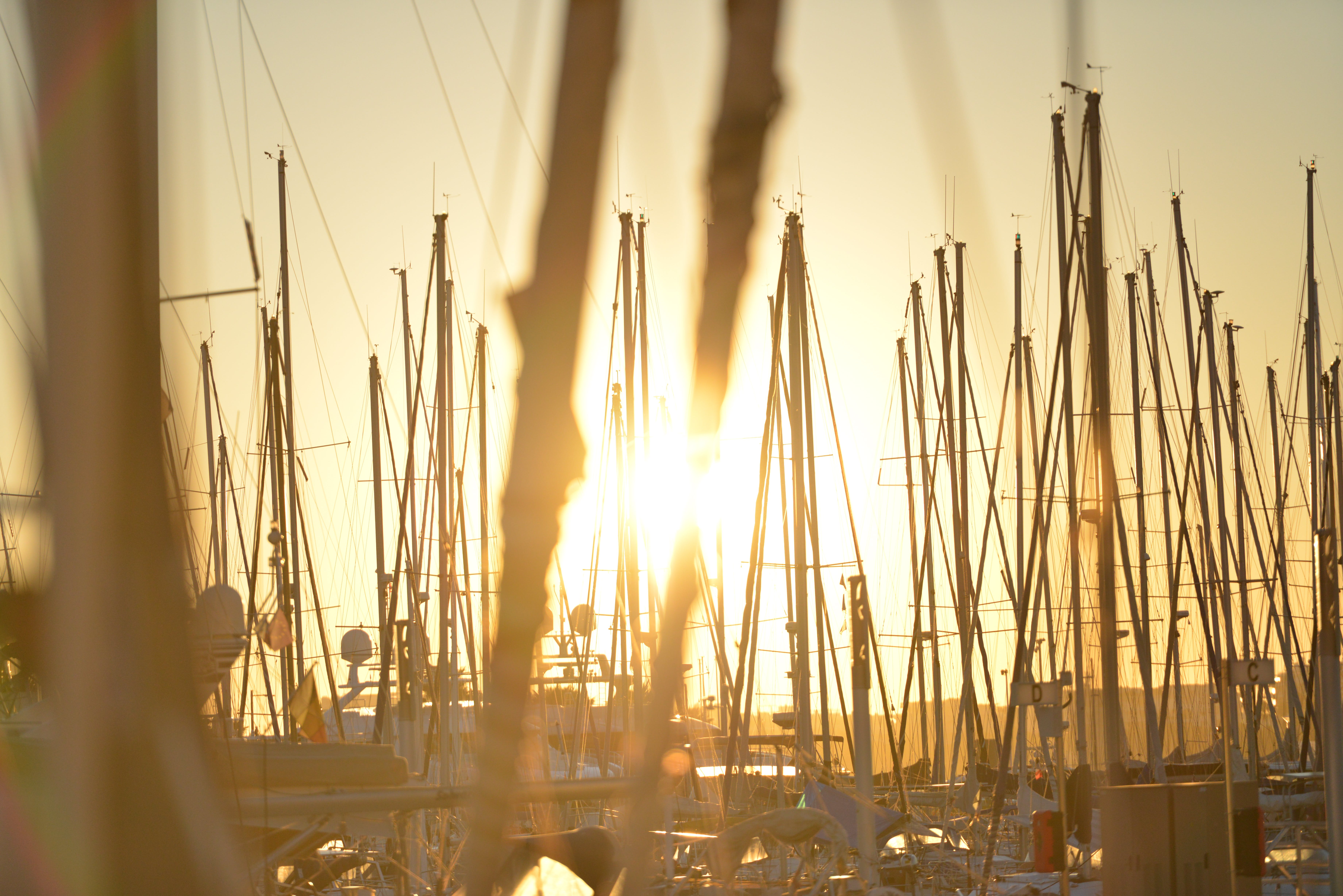 Lot of Sailboats during Golden Hour