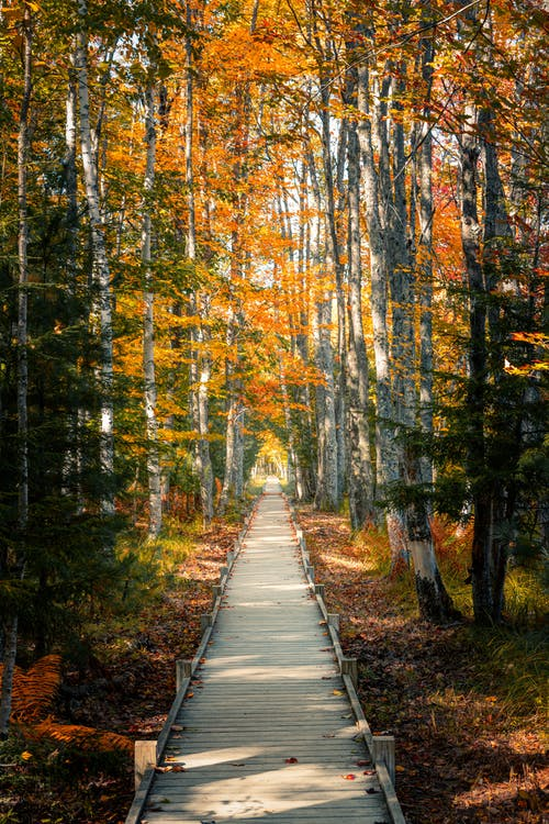 Empty walkway in autumn forest