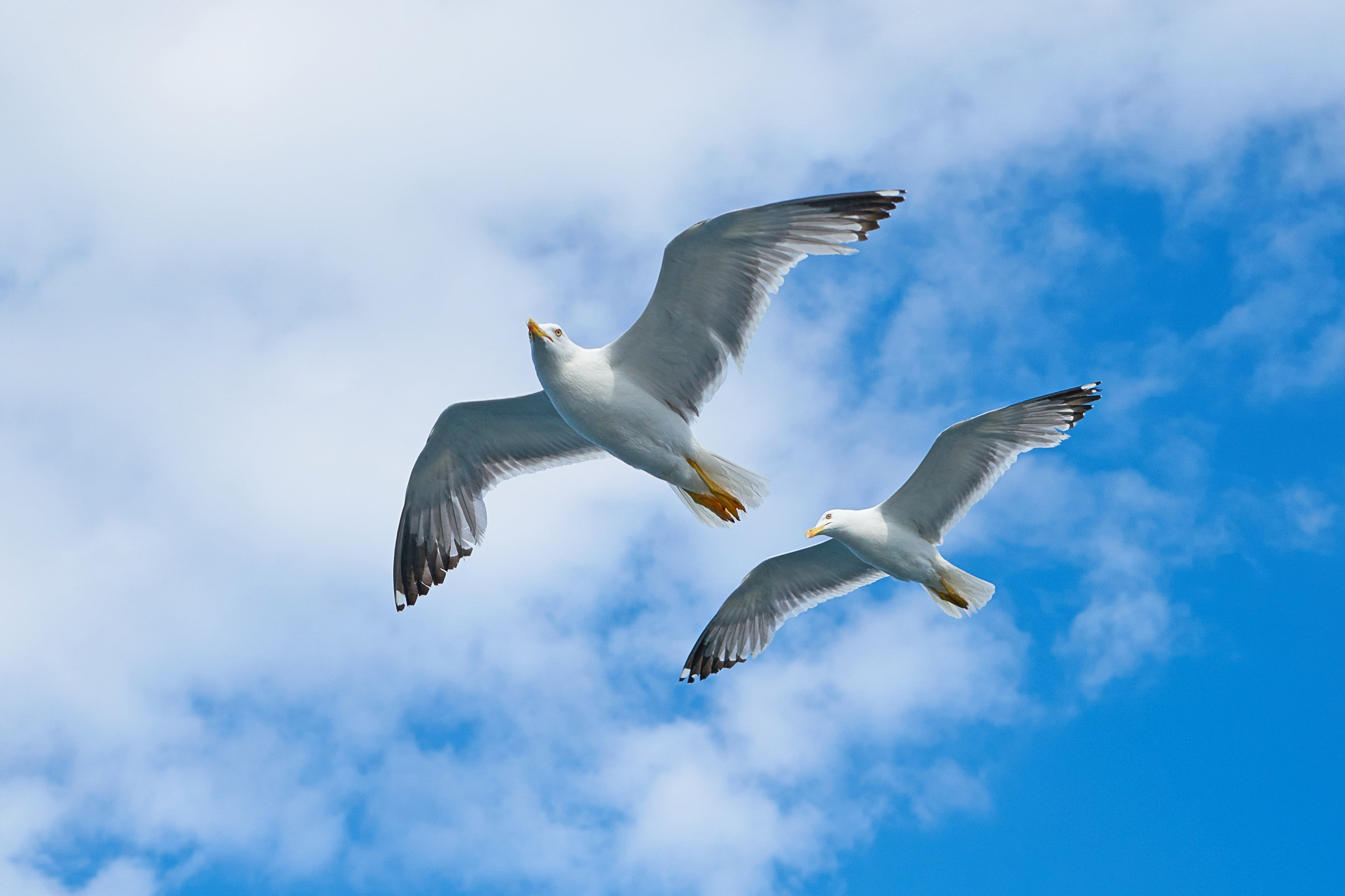 Two White Birds Flying Under Cloudy Sky