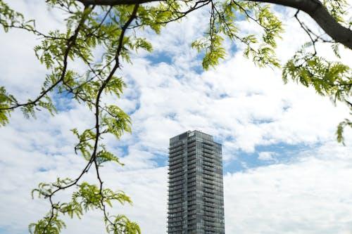 Darmowe zdjęcie z galerii z architektura, budynek, budynek od zewnątrz, drewno