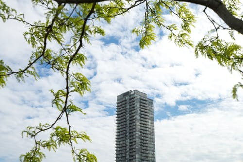 Tree Near High-rise Building Under Blue Sky