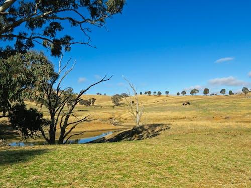 Free stock photo of australia, australian, billabong