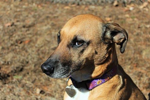 Gratis arkivbilde med hund, huslig, kjæledyr, ly hund
