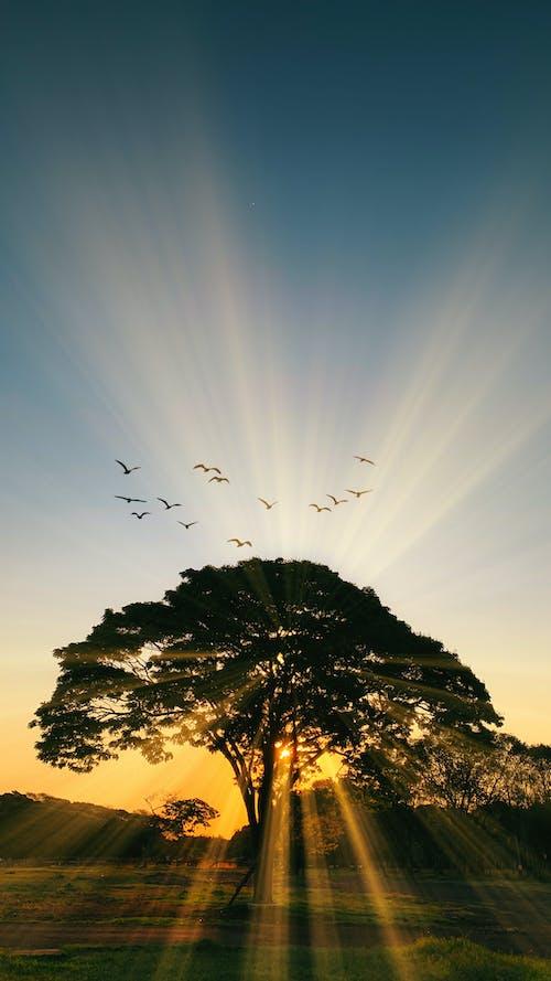 Photos gratuites de arbre au coucher du soleil, heure dorée, oiseau