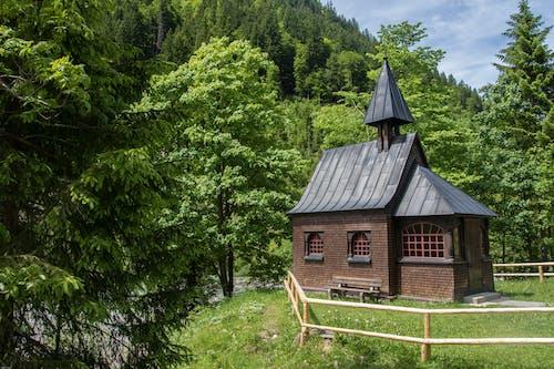 Ingyenes stockfotó építészet, erdő, fából készült, fák témában