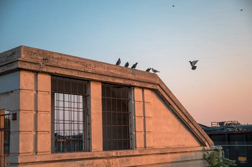 Birds flying on roof of building