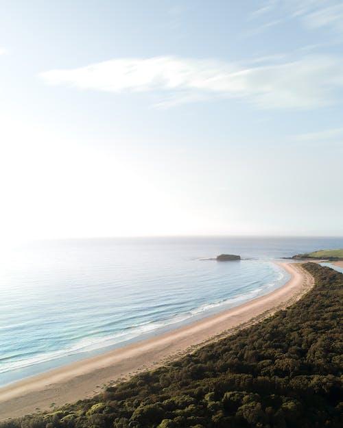 Trees on sandy coast near endless ocean in summer