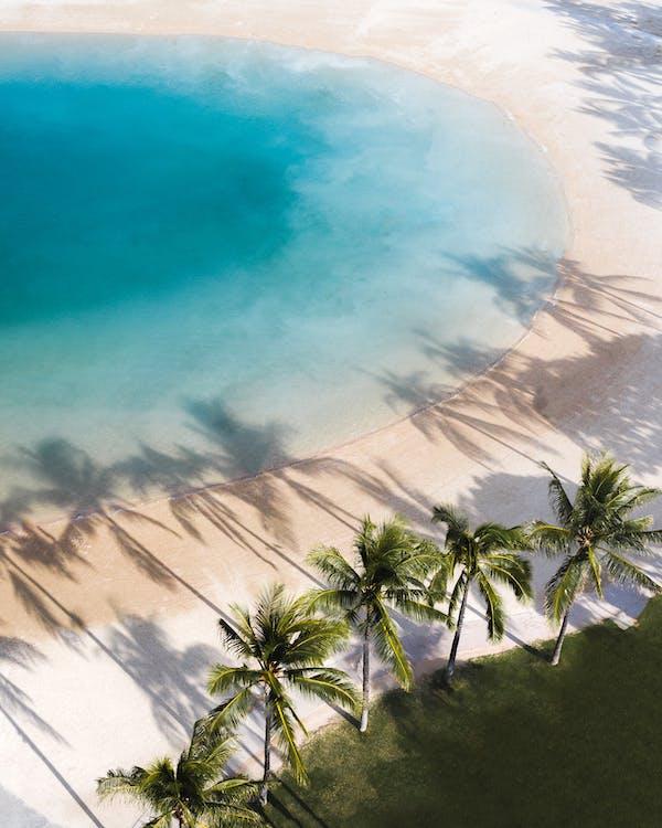 Green Palm Tree on Beach Shore