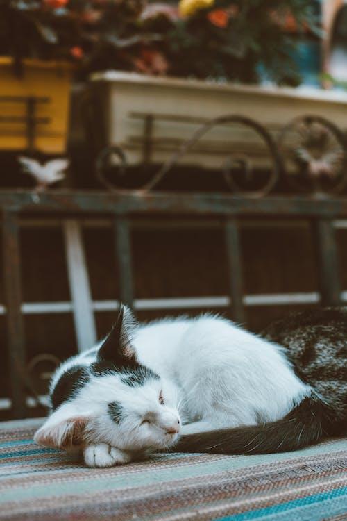 Kostnadsfri bild av däggdjur, dämpa, husdjur