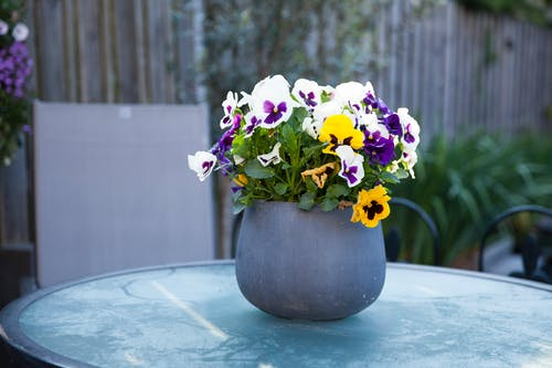 Free stock photo of back yard, blooming flowers, chilly