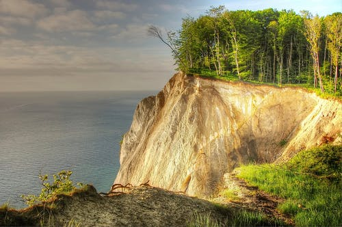 Trees on Cliff Beside Shoreline