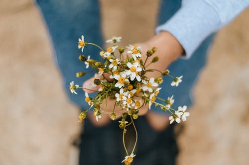 Hand Holding a Bunch of Small Flowers