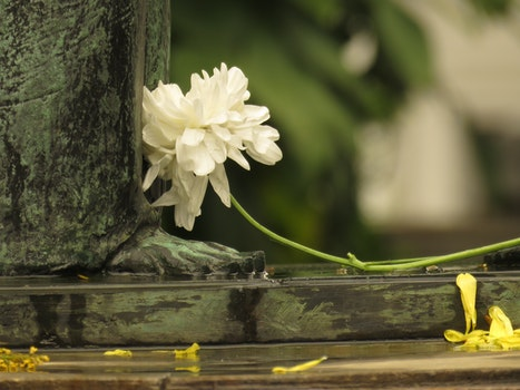 Free stock photo of art, architecture, white, flower
