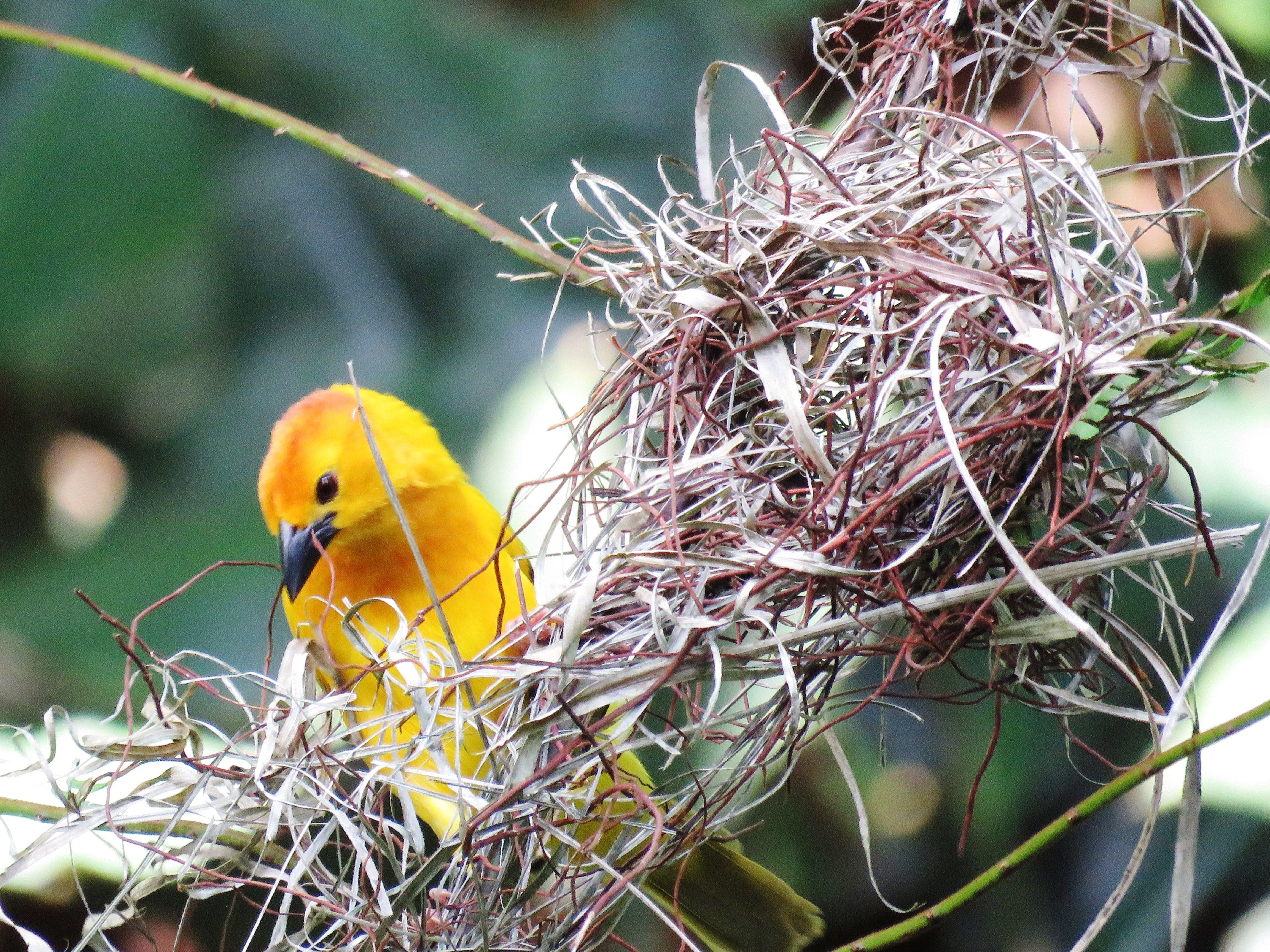 Základová fotografie zdarma na téma barevný, barva, brčko, hnízdo