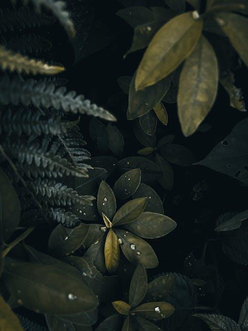 Fotobanka sbezplatnými fotkami na tému kvapôčky vody, listy, rastliny