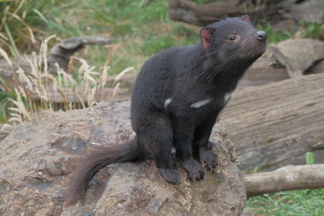 Black Bear on Brown Tree Trunk